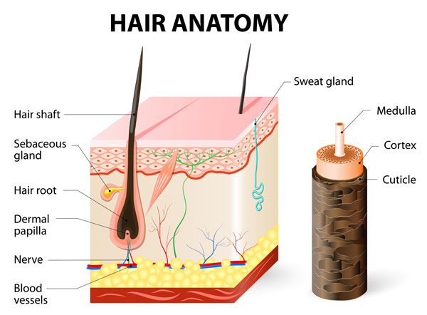 Stem cells hair transplantation